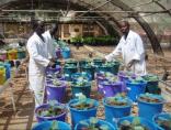 EcoSols_DominiqueMasse_ExperimentationSousSerre_Senegal